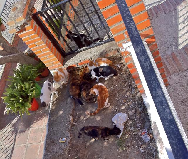 Los Gatos - Canillas de Aceituno